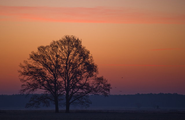 The sky is illuminated behind a tree near Jaenschwalde, eastern Germany, on November 14, 2012. Temperatures below zero caused frost in many parts of Germany. (Photo by Patrick Pleul/AFP Photo)