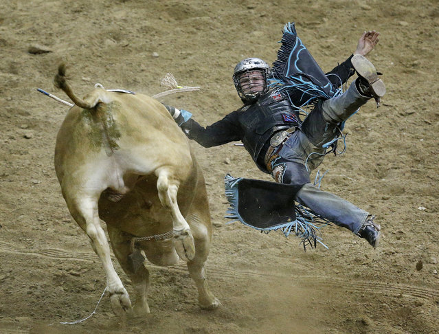 Reid Barker is thrown during the first go-round of bull riding at the National Finals Rodeo on Thursday, December 3, 2015, in Las Vegas. (Photo by John Locher/AP Photo)