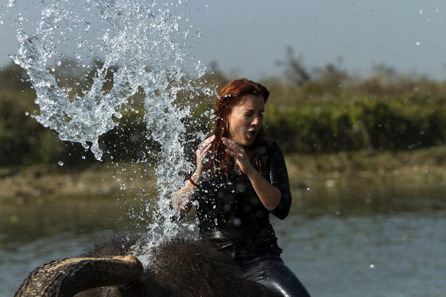 A foreign tourist takes an elephant bath at Rapti River, Saruaha, Chitawan, some 154 kilometer from the capital of Kathmandu, Nepal, 28 December 2015. Chitwan is the one of the most popular tourism area in Nepal. (Photo by Hemanta Shrestha/EPA)