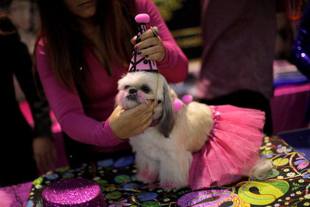 "A woman places a hat on a dog as she takes part in a fashion exhibition during the fifth edition of the ""Mi Mascota"" (My Pet) fair in Malaga, southern Spain, November 27, 2016. (Photo by Jon Nazca/Reuters)"