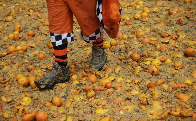 "A member of a rival team walks during an annual carnival battle with oranges in the northern Italian town of Ivrea February 15, 2015. Dressed up as Middle Age kings' guards, a group of men ride in a horse-drawn carriage and pelt ""foot soldiers"" with oranges as thousands of people gather to re-enact a Middle Age battle when the townsfolk of Ivrea overthrew an evil king. (Photo by Max Rossi/Reuters)"