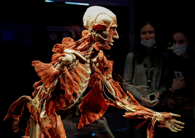 """Visitors look at a plastinated human body during the """"Body Worlds"""" exhibition by German anatomist Gunther von Hagens at a pavilion of the Exhibition of Achievements of National Economy (VDNKh) in Moscow, Russia March 24, 2021. Head of Russian Investigative Committee Alexander Bastrykin ordered a probe of the exhibition after it sparked outrage among conservative religious groups and public figures. (Photo by Evgenia Novozhenina/Reuters)"""