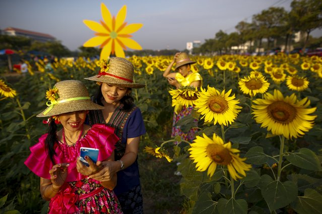 "Participants take a ""selfie"" at a sunflower field in Bangkok, Thailand, January 13, 2016. (Photo by Athit Perawongmetha/Reuters)"