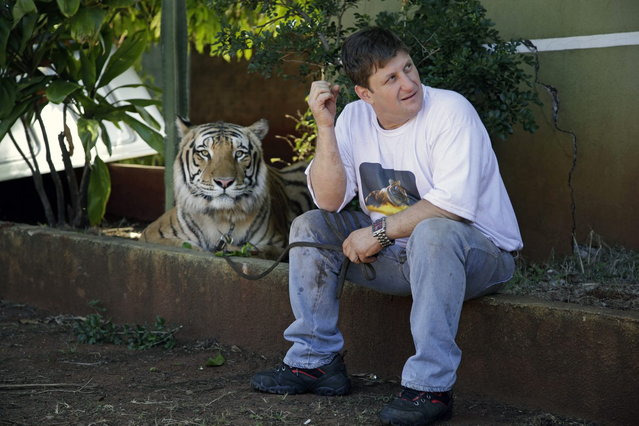 Ary Borges sits with one of his nine tigers in his backyard in Maringa, Brazil, Thursday, September 26, 2013. Borges says it all started in 2005 when he first rescued two abused tigers from a traveling circus. He defends his right to breed the animals and says he gives them a better home than they might find elsewhere in Brazil. (Photo by Renata Brito/AP Photo)