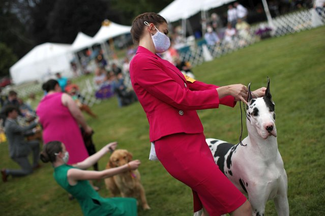 Logan Yankowski of Houston, Texas, poses her Great Dane dog Logan, during judging in the Junior Showmanship Competition at the 145th Westminster Kennel Club Dog Show at Lyndhurst Mansion in Tarrytown, New York, U.S., June 13, 2021. (Photo by Mike Segar/Reuters)