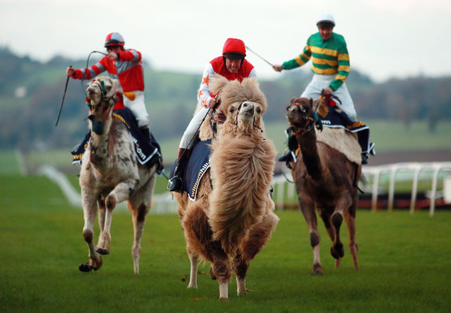 Andy Smith on his way to victory in the second heat during The William Hill Camel Derby at Chepstow Racecourse, on November 21, 2013. (Photo by David Davies/PA Wire)