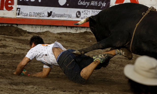 """A participant is gored by a bull during a traditional bullfighting festival called """"Toros a la tica"""" in San Jose, Costa Rica January 6, 2017. (Photo by Juan Carlos Ulate/Reuters)"""