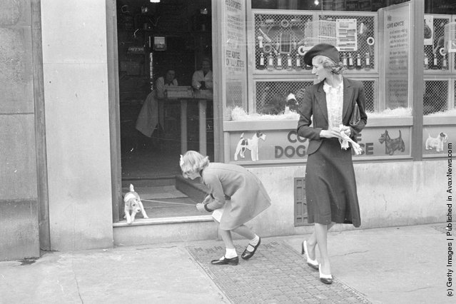 A little puppy is reluctant to leave the Complete Dog Service shop where pet owners go to seek advice, inoculations against distemper, petcare equipment, pet food and pet grooming services, 1940