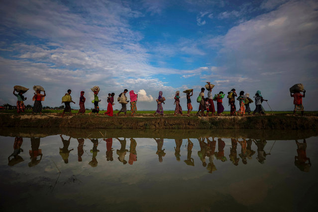 Rohingya refugees along an embankment next to paddy fields after fleeing from Myanmar into Bangladesh on 2 November 2017. (Photo by Hannah McKay/Reuters)
