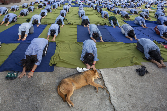 A dog sleeps as exile Tibetan students of the Tibetan Children's Village School participate in a yoga session to mark International Yoga Day in Dharmsala, India, Friday, June 21, 2019. (Photo by Ashwini Bhatia/AP Photo)