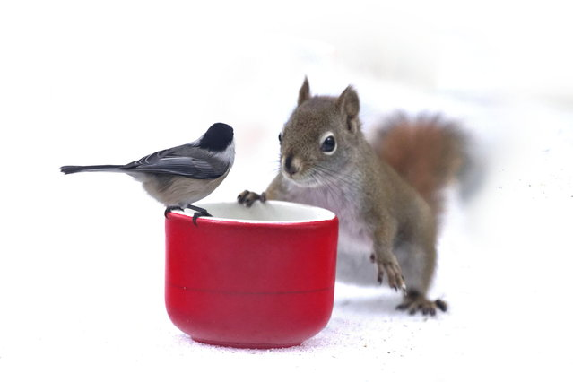 """Mon ami Berry"". (Photo by Andre Villeneuve)"