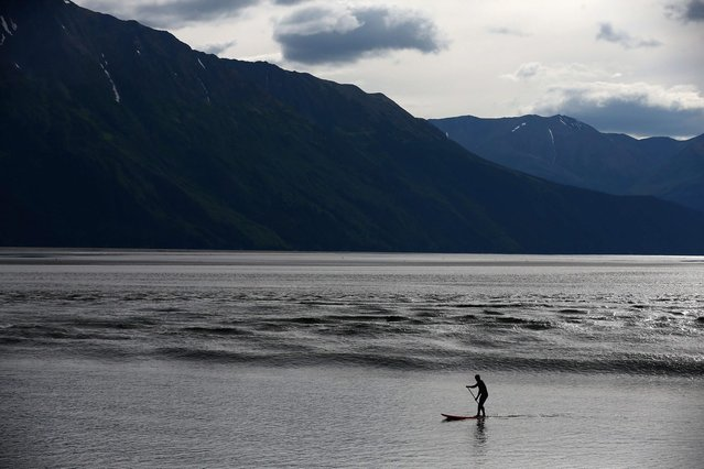 A surfer rides the Bore Tide at Turnagain Arm on July 12, 2014 in Anchorage, Alaska. Alaskas most famous Bore Tide, occurs in a spot on the outside of Anchorage in the lower arm of the Cook Inlet, Turnagain Arm, where wave heights can reach 6-10 feet tall, move at 10-15 mph and the water temperature stays around 40 degrees farenheit. This years Supermoon substantially increased the size of the normal wave and made it a destination for surfers. (Photo by Streeter Lecka/Getty Images)