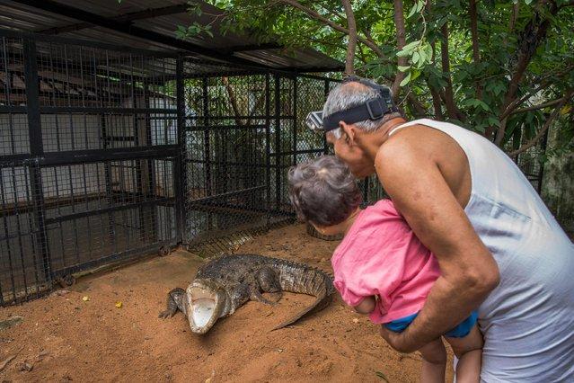 Doctor's Prakash Amte houses over a 100 dangerous species including crocodiles on September 19, 2017 in Maharashtra, India. (Photo by Haziq Qadri/Barcroft Media)