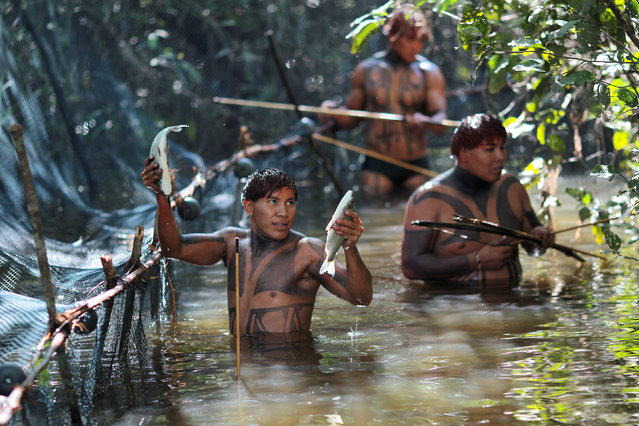 "Yawalapiti tribe members catch fish to dry and save for the future celebration of ""quarup"", a ritual held to honor in death a person of great importance to them, in the Xingu National Park, Mato Grosso State, May 7, 2012. (Photo by Ueslei Marcelino/Reuters)"