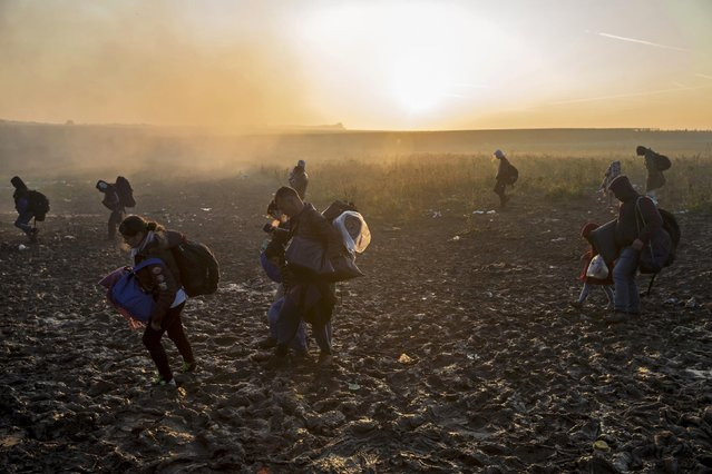 Migrants carry their belongings as they walk through a field to cross the border with Croatia near the village of Berkasovo, Serbia, October 21, 2015. (Photo by Marko Djurica/Reuters)
