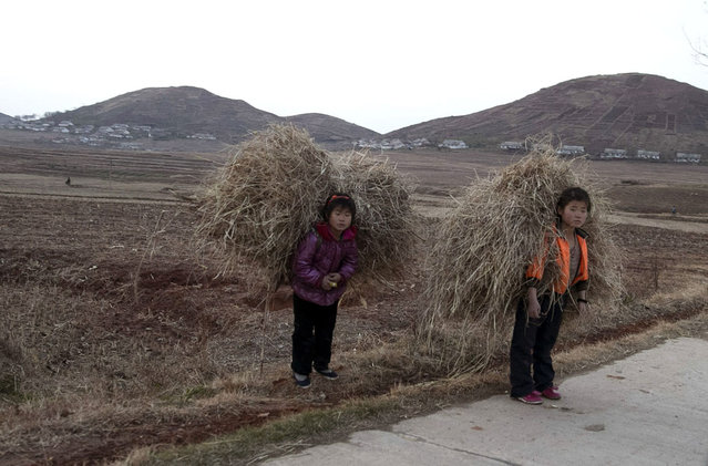 North Korean children carry hay on a road near Mount Kuwol in South Hwanghae province, on November 20, 2012. (Photo by Ng Han Guan/AP Photo)
