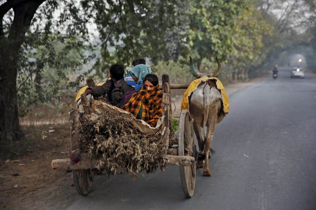 An Indian woman wrapped in a shawl travels with others on a bullock cart on a cold day at Jhansi district, in Bundelkhand, India, Monday, December 29, 2014. Most parts of north India Monday continued to shiver under biting cold with the mercury dipping several notches. (Photo by Rajesh Kumar Singh/AP Photo)