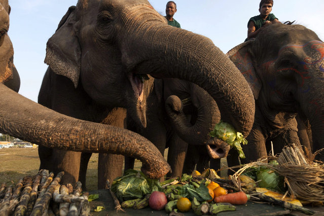 Nepalese Mahuts with their elephant participate in elephant picnic as a part of the12th Chitawan Elephant Festival at Sauhara, Chitawan, some 154 kilometer from the capital of Kathmandu, Nepal, 28 December 2015. (Photo by Hemanta Shrestha/EPA)