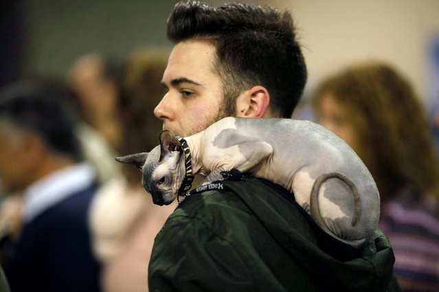 "A man carries a cat on his back during the fifth edition of the ""Mi Mascota"" (My Pet) fair in Malaga, southern Spain, November 27, 2016. (Photo by Jon Nazca/Reuters)"