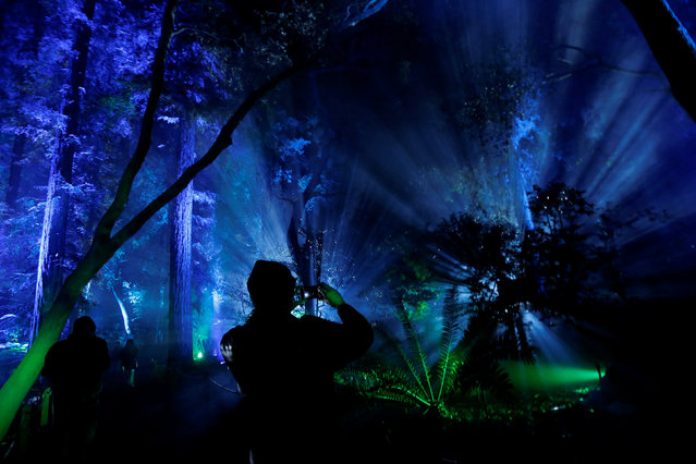 "A visitor uses his mobile phone at ""Ancient Forest"" at the exhibit ""Enchanted: Forest of Light"" at Descanso Gardens in La Canada Flintridge, California U.S., December 9, 2016. (Photo by Mario Anzuoni/Reuters)"