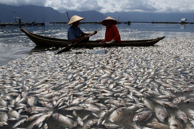 Fishermen are seen near thousands of fish found dead at Lake Maninjau due to lack of oxygen levels at the bottom of the lake and bad weather that hit the area in Agam, West Sumatra Province, Indonesia on April 29, 2021. (Photo by Muhammad Arif Pribadi/Antara Foto via Reuters)