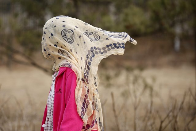 A woman wearing a scarf covering her face, to protect herself from pollution, walks in a park in Beijing, March 18,  2015. (Photo by Kim Kyung-Hoon/Reuters)