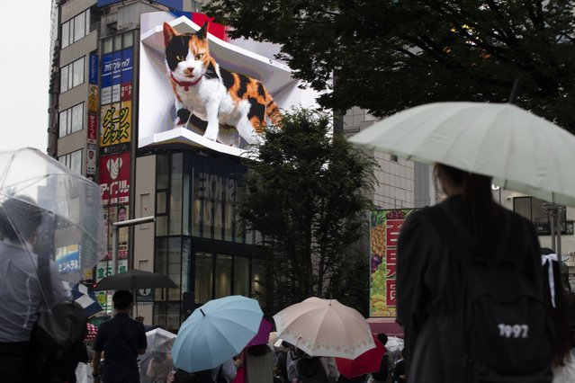 People walk by a 3D video advertisement display of a giant cat that was recently installed in the famed Shinjuku shopping district in Tokyo on Friday, July 9, 2021. (Photo by Hiro Komae/AP Photo)