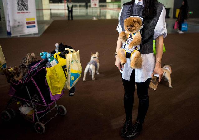 A woman carries her dog at the Shanghai International Pet Expo in Shanghai on March 18, 2016. (Photo by Johannes Eisele/AFP Photo)