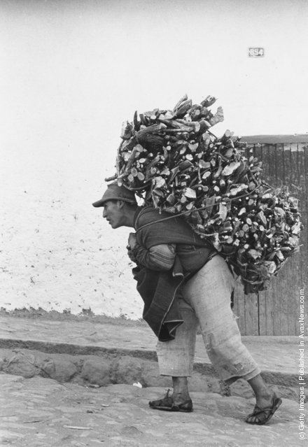 A Peruvian cargodore in Cuzco makes a living by carrying heavy loads on his back, 1955