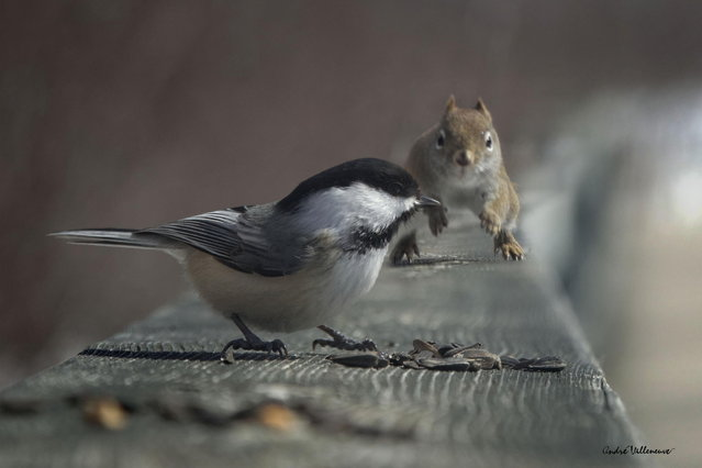 """Eat and run"". (Photo by Andre Villeneuve)"