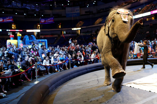 """An elephant performs in the pre-show entertainment at Ringling Bros and Barnum & Bailey Circus' """"Circus Extreme"""" show at the Mohegan Sun Arena at Casey Plaza in Wilkes-Barre, Pennsylvania, U.S., April 29, 2016. (Photo by Andrew Kelly/Reuters)"""