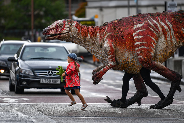 Freya Smith aged three, leads one of Erth's giant dinosaur puppets across the road on August 6, 2019 in Edinburgh, Scotland. Australian theatre company Erth presents their best-selling show Dinosaur's Zoo as part of Underbelly's Fringe programme. Featuring giant dinosaur puppets which walk, roar and blink like the real thing, Dinosaur's Zoo is a perfect example of edutainment for children of all ages, taking place at the McEwan Hall every day of the Fringe at 11am. (Photo by Jeff J. Mitchell/Getty Images)