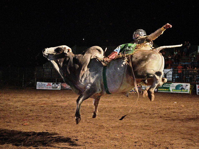 A rider competes during a rodeo event in Monte Negro, south of the Amazon basin, Rondonia state, Brazil on August 30, 2019. (Photo by Carl De Souza/AFP Photo)