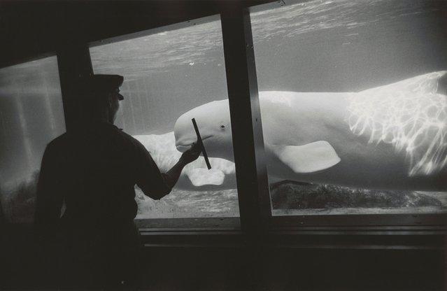 New York Aquarium, Coney Island, New York, 1967. (Photo by Garry Winogrand/The Estate of Garry Winogrand, courtesy Fraenkel Gallery, San Francisco)