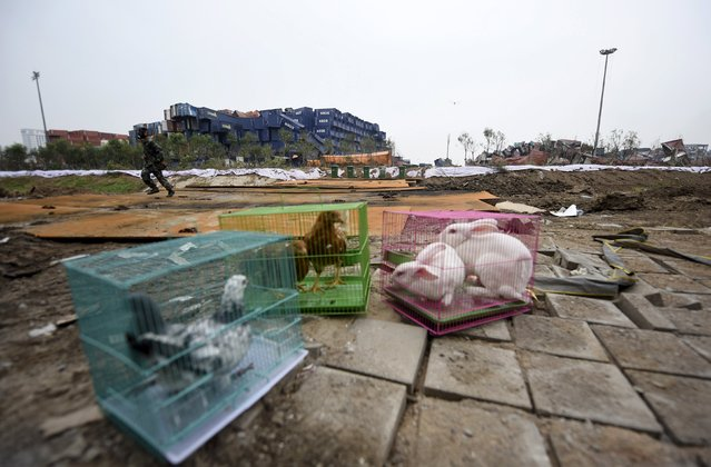 A soldier (back) with gas mask on, run behind animals in cages, (from L to R) pigeons, chickens and rabbits, which are placed by authority as a test of the living conditions near the site of last week's blasts at Binhai new district in Tianjin, China, August 19, 2015. (Photo by Reuters/Stringer)