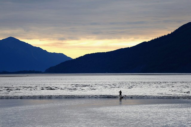A surfer rides the Bore Tide late in the evening at Turnagain Arm on July 15, 2014 in Anchorage, Alaska. Alaskas most famous Bore Tide, occurs in a spot on the outside of Anchorage in the lower arm of the Cook Inlet, Turnagain Arm, where wave heights can reach 6-10 feet tall, move at 10-15 mph and the water temperature stays around 40 degrees farenheit. This years Supermoon substantially increased the size of the normal wave and made it a destination for surfers. (Photo by Streeter Lecka/Getty Images)