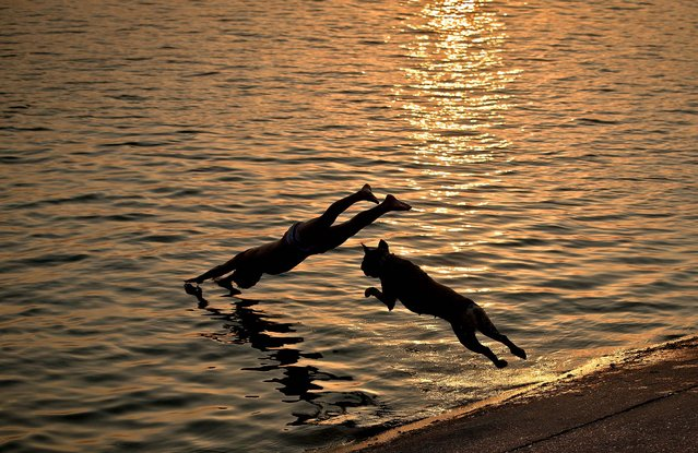 Aisha the dog follows her owner as he jumps into a lake at sunset in Bucharest, Romania, on August 12, 2014. (Photo by Vadim Ghirda/Associated Press)