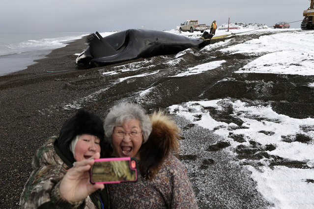 Molly Pederson, right, and daughter Laura Patkotak take a picture as a bowhead whale, caught by Alaska Native subsistence hunters from their family, is brought ashore in Barrow, Alaska, October 27, 2014. (Photo by Gregory Bull/AP Photo)