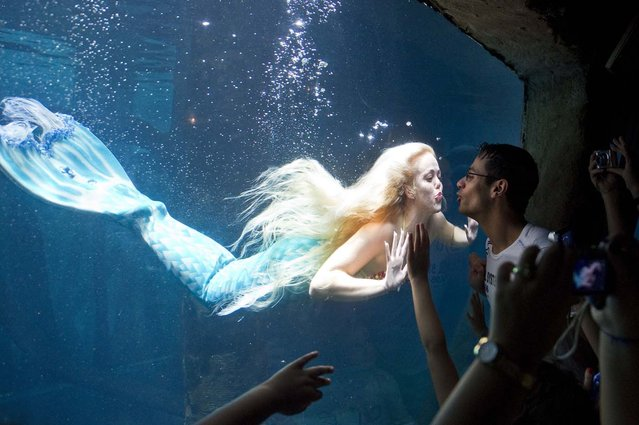 Visitors watch Mirella Ferraz, known as Brazilian mermaid, as she swims with fish in a giant tank during a show at an aquarium in Sao Paulo, Brazil, on February 10, 2013. (Photo by Nelson Almeida/AFP Photo)