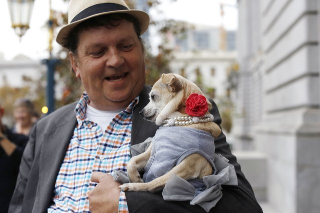 """Dean Clark carries Frida, a female Chihuahua, outside City Hall after the San Francisco Board of Supervisors issued a special commendation naming Frida """"Mayor of San Francisco for a Day"""" in San Francisco, California November 18, 2014. (Photo by Stephen Lam/Reuters)"""