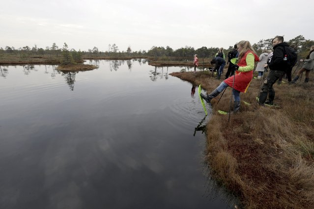 People look at the lake during a tour of the Great Kemeri Bog, Latvia, October 17, 2015. (Photo by Ints Kalnins/Reuters)