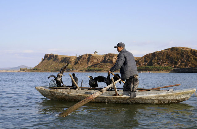 A North Korean fisherman pilots a boat with cormorants perched onboard, in the Yalu River near the North Korean town of Sinuiju, facing the Chinese border city of Dandong, on October 23, 2012. (Photo by Aly Song/Reuters)