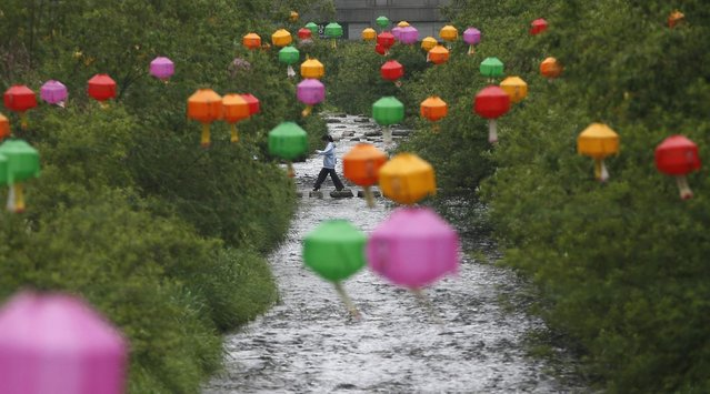 A woman crosses stepping-stones underneath lotus lanterns, which have been hung up in preparation for the upcoming of birthday of Buddha, along the Cheonggye stream in central Seoul May 14, 2013. Buddha's birthday falls on May 17 in South Korea. (Photo by Kim Hong-Ji/Reuters)