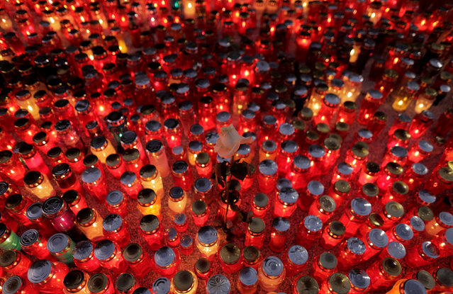 White rose is seen among candles during All Saints Day at Mirogoj cemetery in Zagreb, Croatia November 1, 2016. (Photo by Antonio Bronic/Reuters)