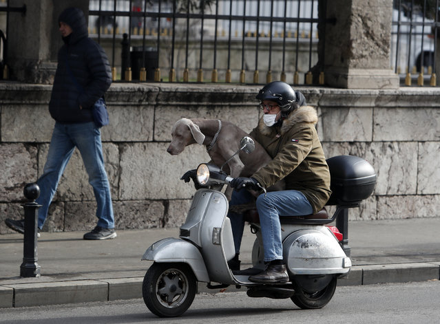 A man wearing a face mask to protect against coronavirus with dog ride a motor scooter in Belgrade, Serbia, Friday, February 19, 2021. (Photo by Darko Vojinovic/AP Photo)