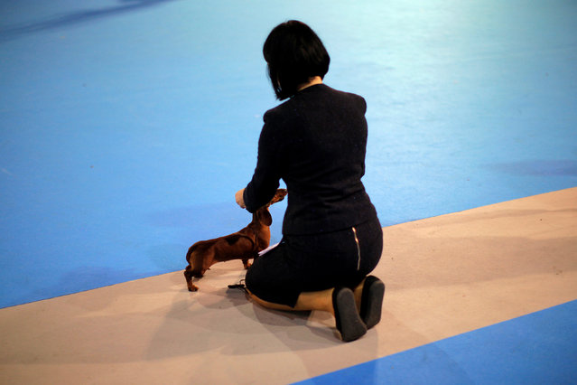 "A handler shows her dog as she takes part in a competition during the fifth edition of the ""Mi Mascota"" (My Pet) fair in Malaga, southern Spain, November 27, 2016. (Photo by Jon Nazca/Reuters)"