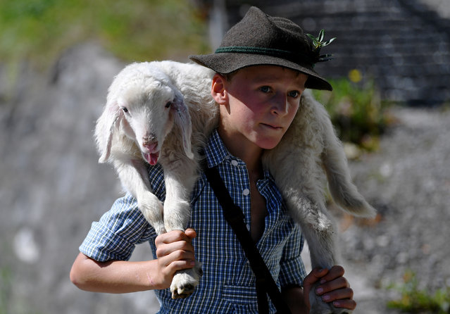 """A boy carries a little sheep from its summer pastures in the mountains down to the valley and through the town of Mittenwald during the traditional """"Almabtrieb"""" in Mittenwald, Germany, September 8, 2018. (Photo by Andreas Gebert/Reuters)"""
