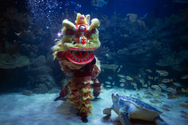 Divers perform an underwater Chinese lion dance on the first day of the Chinese Lunar New Year at Aquaria KLCC underwater park in Kuala Lumpur, Malaysia on Thursday, February 19, 2015. (Photo by Joshua Paul/AP Photo)