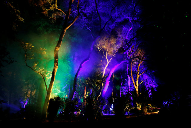 """Visitors walk through """"Ancient Forest"""" at the exhibit """"Enchanted: Forest of Light"""" at Descanso Gardens in La Canada Flintridge, California U.S., December 9, 2016. (Photo by Mario Anzuoni/Reuters)"""