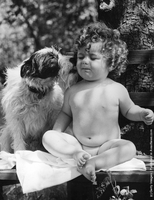 Frances Huggins gets a kiss from her pet dog for coming first in a Victory Effort Week baby show, 1941